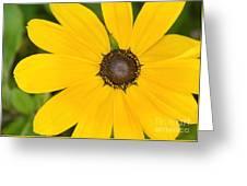 Pretty In Yellow Greeting Card