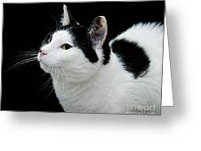 Pretty Kitty Cat 2 Greeting Card