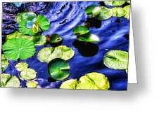Pretty Lily Pads Greeting Card