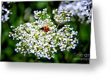 Pretty Little Ladybug Greeting Card by Mariola Bitner