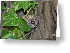 Pretty Morpho Butterfly Resting In A Butterfly Garden  Greeting Card