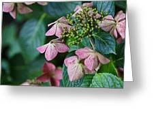Pretty Old Flowers Greeting Card