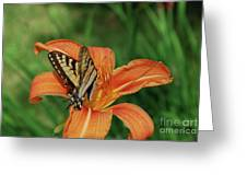 Pretty Orange Lily With A Butterfly On It's Petals Greeting Card