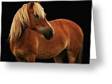 Pretty Palomino Pony Greeting Card