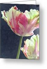 Pretty Parrot Tulip 2 Greeting Card