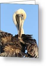Pretty Pelican Greeting Card