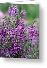 Pretty Pink And Purple Flowers Greeting Card