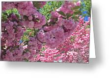 Pretty Pink Blossoms Greeting Card