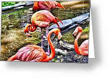 Pretty Pink Flamingos Greeting Card