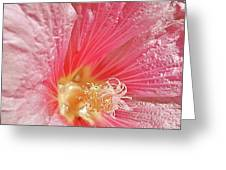 Pretty Pink Flower Greeting Card
