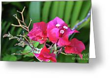 Pretty Pink Flowers 2 Greeting Card