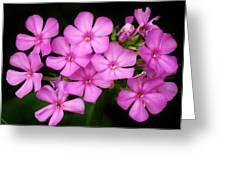 Pretty Pink Prairie Phlox Greeting Card