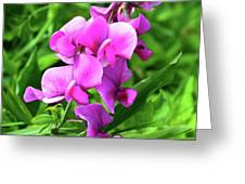 Pretty Pink Sweetpea  Greeting Card