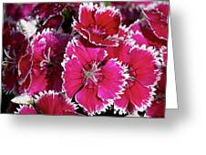 Pretty Pinks Greeting Card
