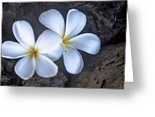 Pretty Plumeria Greeting Card