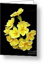 Pretty Primrose Greeting Card