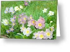 Pretty Primulas 1008 Greeting Card