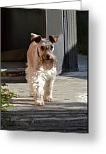 Pretty Pup Greeting Card