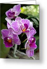 Pretty Purple And White Greeting Card