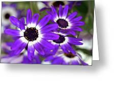 Pretty Purple Daisies Greeting Card