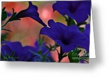 Pretty Petunias Greeting Card
