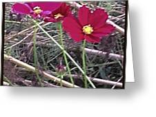 Pretty Red And Yellow Flowers In The Twigs Greeting Card