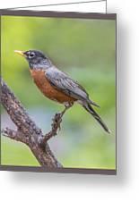 Pretty Robin Greeting Card