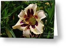 Pretty Single Blooming Daylily In A Garden Greeting Card