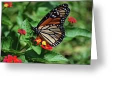 Pretty Spots Greeting Card