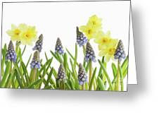 Pretty Spring Flowers All In A Row Greeting Card