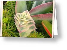 Pretty Succulents Greeting Card