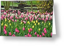 Pretty Tulips Garden Greeting Card