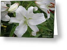 Pretty White Lilies Blooming In A Garden Greeting Card