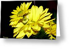 Pretty Yellow Flowers Greeting Card