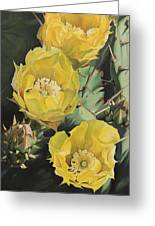 Prickle Pear Cactus Flower Trio Greeting Card