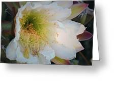 Prickley Pear Cactus Greeting Card by Kate Word