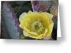 Prickly Blossom Greeting Card