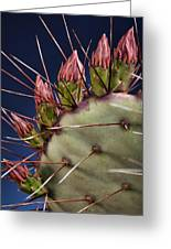 Prickly Buds Greeting Card by Kelley King