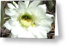 Prickly Extravaganza Greeting Card