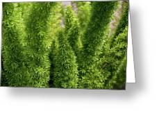 Prickly Green Shrub Greeting Card