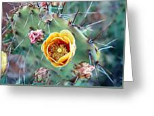 Prickly Pear Bloom Greeting Card