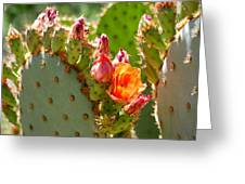Prickly Pear Blooms Greeting Card