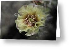 Prickly Pear Blossom 3 Greeting Card by Roger Snyder