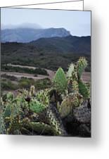 Prickly Pear Cacti Rancho Sierra Vista Satwiwa Mountains Greeting Card