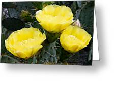 Prickly Pear Cactus Blossoms Greeting Card
