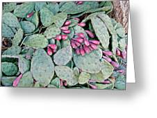 Prickly Pear Cactus Fruits Greeting Card