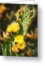 Prickly Pear Cactus In Bloom Greeting Card