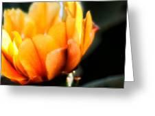 Prickly Pear Flower Greeting Card by Lynn Geoffroy