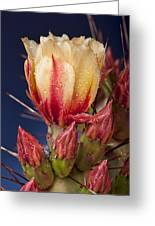 Prickly Pear Flower Wet Greeting Card