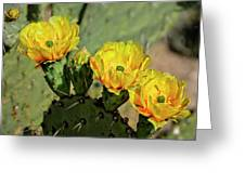 Prickly Pear Flowers H42 Greeting Card